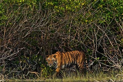 1110.Sundarbans_MM7666_800.600-Copy-400x267.jpg