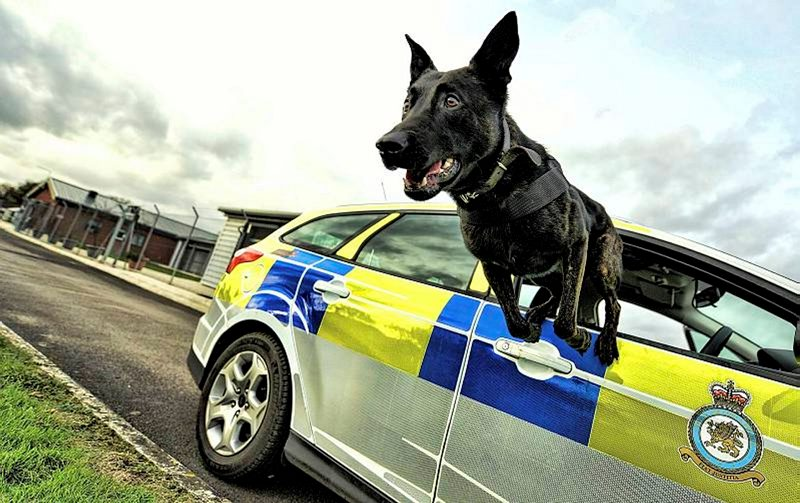 Air Dog Baco leaping out of a Police car at RAF Northolt.jpg