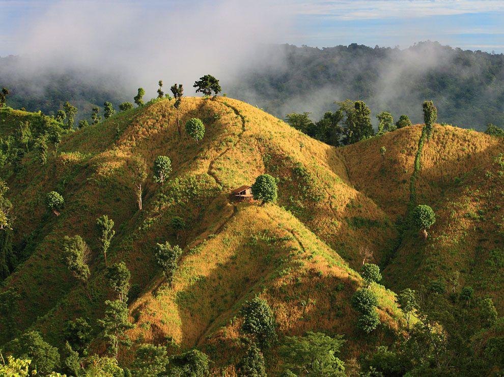 bandarban-paddies-bangladesh_46130_990x742.jpg