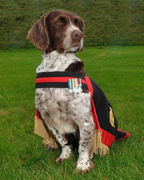 buster military dog.jpg
